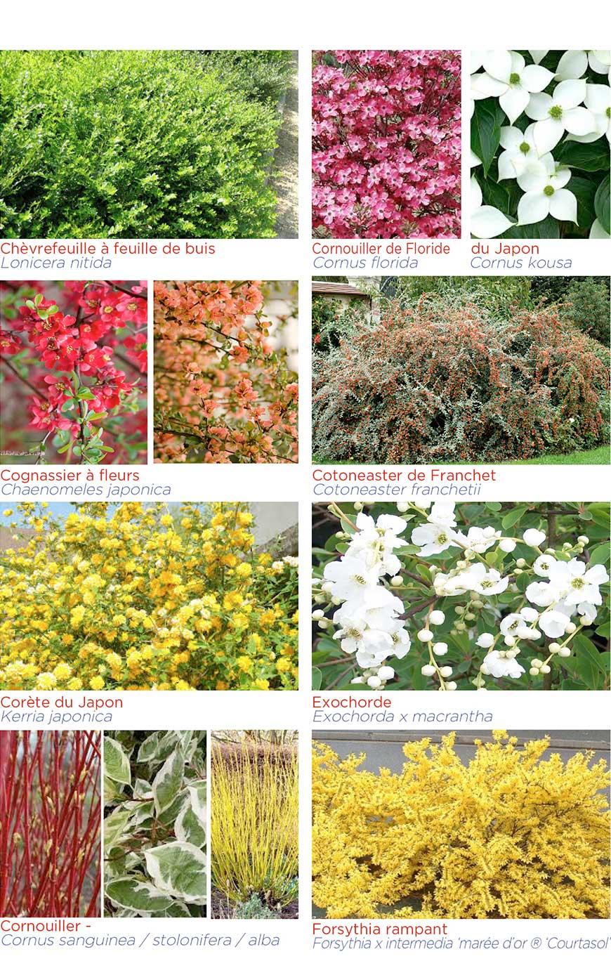Arbustes d'ornement en conteneur