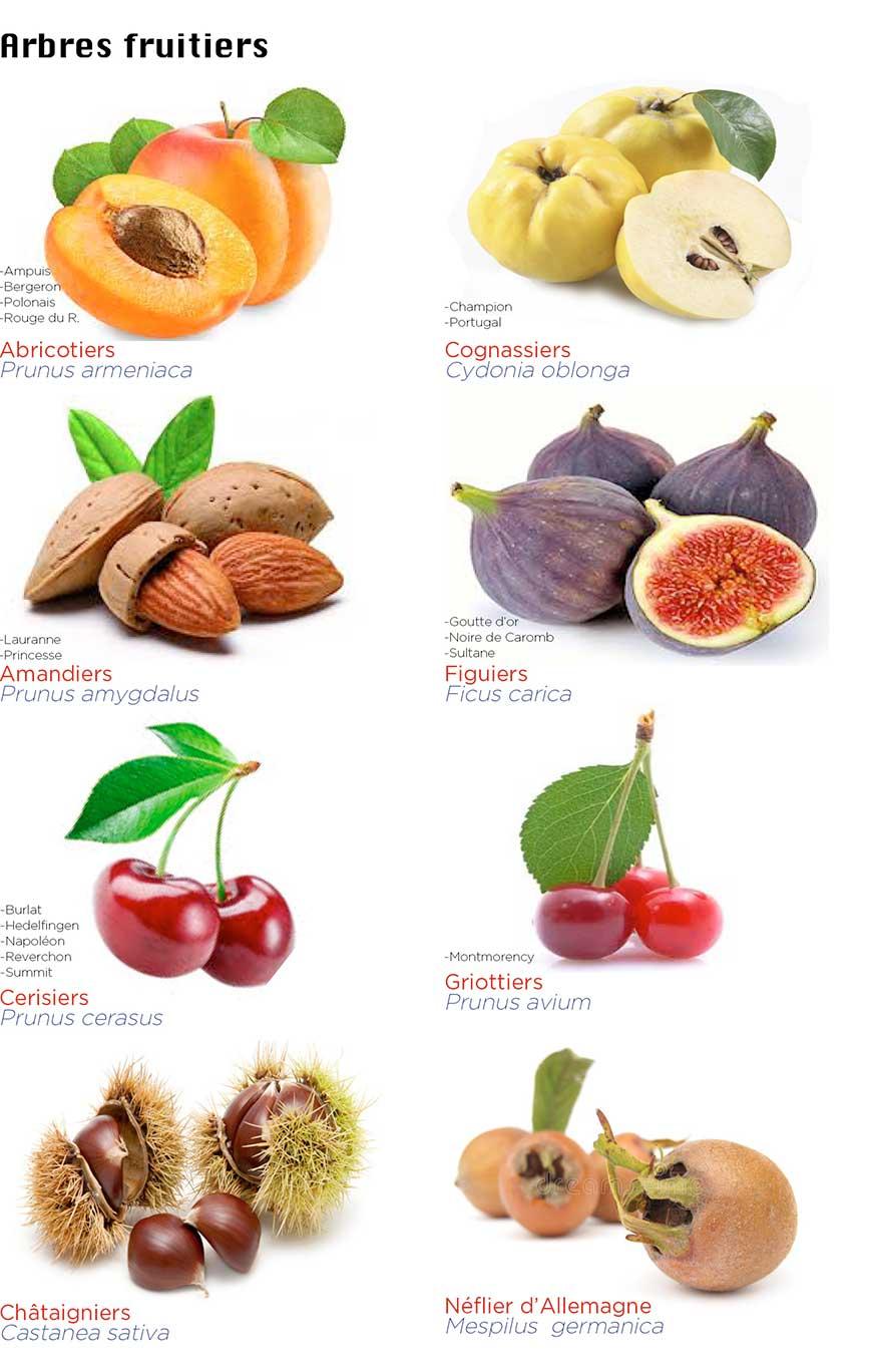 Arbres fruitiers en pleine terre