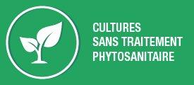 Sans traitement phytosanitaire