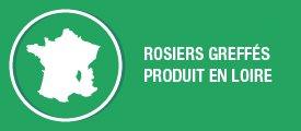 Rosier greffés et produits en Loire