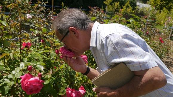 Sélection de roses nouvelles