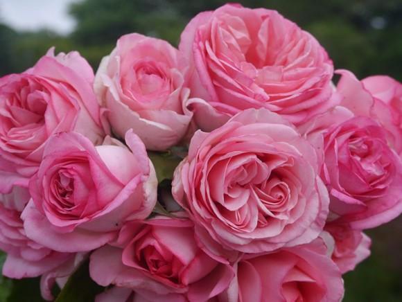 Baptême de la rose des deux Jeanne Croix