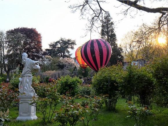 Rose 'Ville d'Annonay'