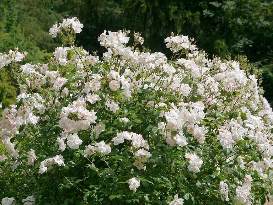 jardin-blanc-04
