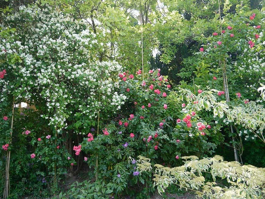 jardin-blanc-10