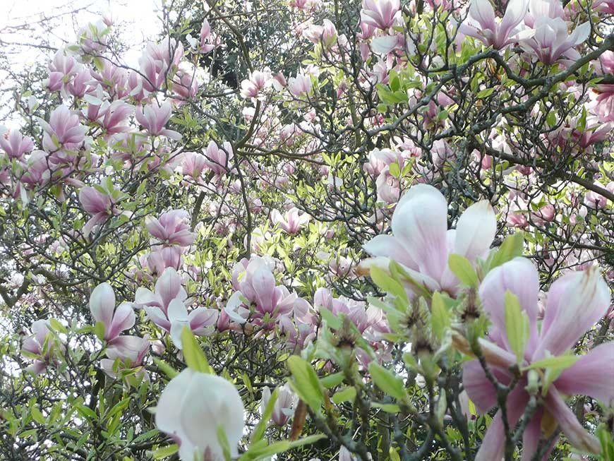 jardin-blanc-11
