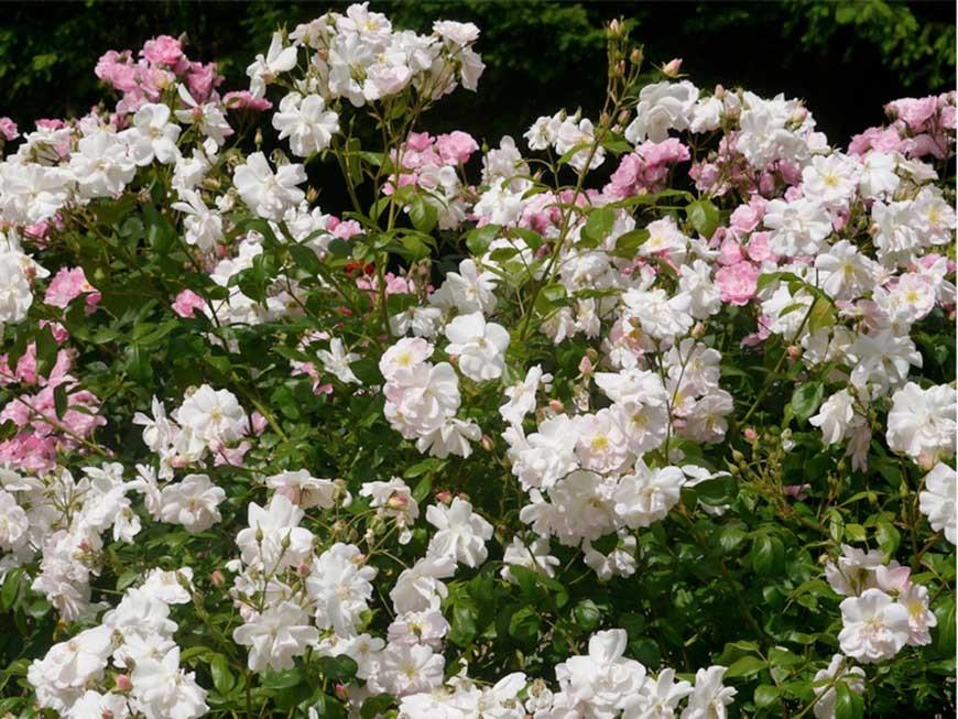 jardin-blanc-14