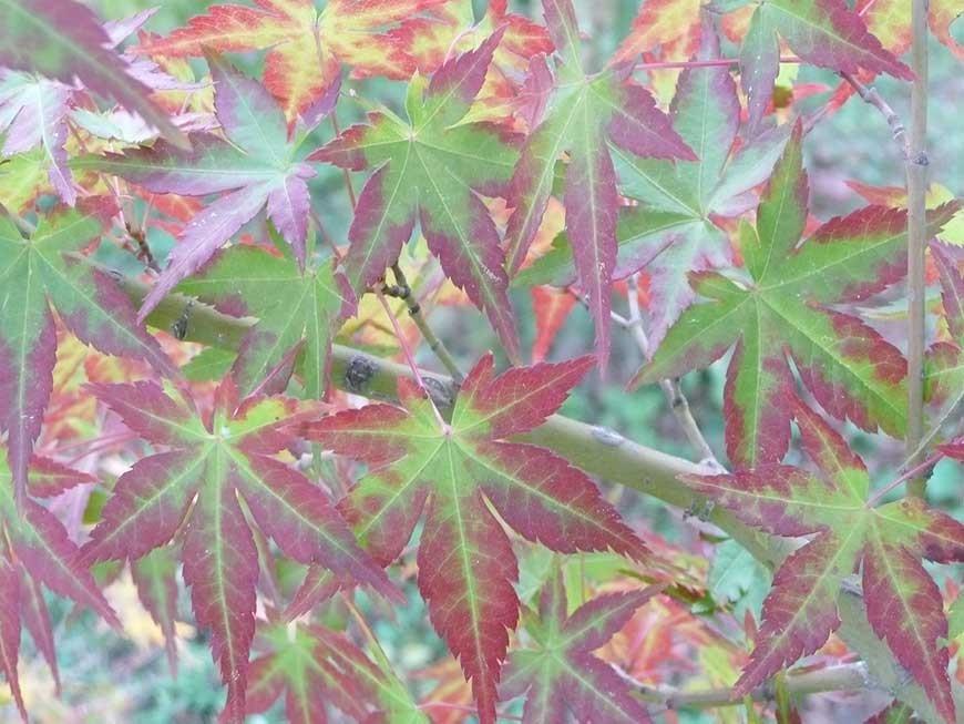 jardin-japonais-05