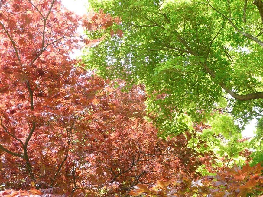 jardin-japonais-17