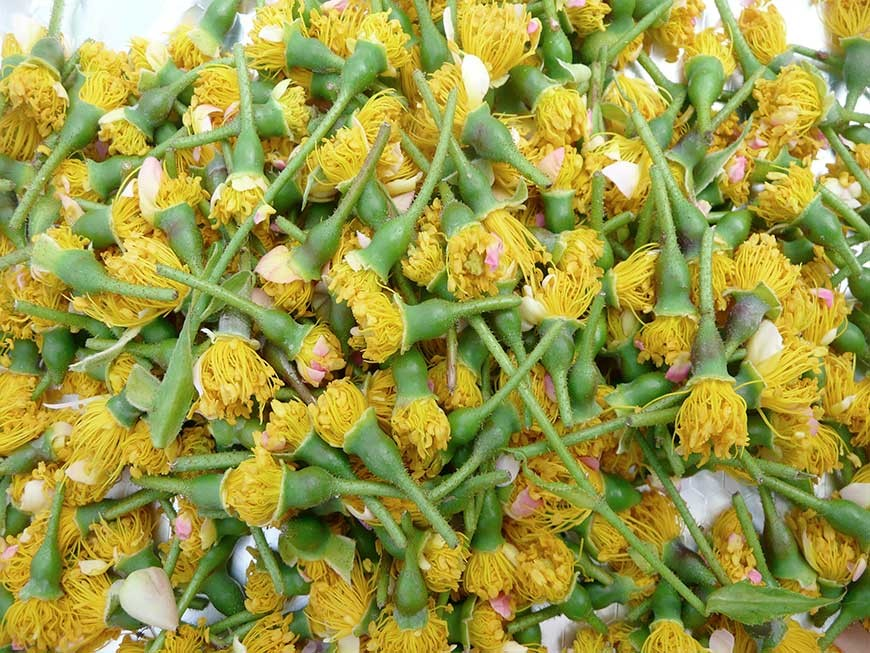 recolte du pollen