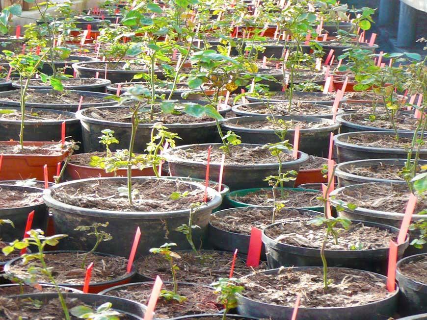 semis en serre